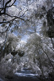 Infrared photo of tropical forest Stock Image
