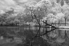Infrared photography black and white, Vachirabenjatas Park, land mark of Bangkok, Thailand. Royalty Free Stock Image