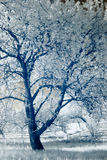 Infrared photography; landscape; park; garden; Stock Image