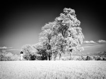 Infrared photography landscape Stock Image