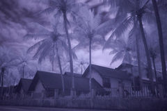 Infrared photography of palms and bungalows Stock Photos