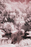 Infrared pond Royalty Free Stock Photography