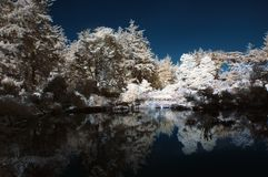 Infrared Pond with Trees Royalty Free Stock Photo