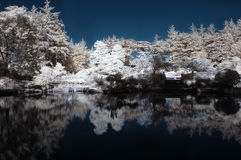 Infrared Pond with Trees Stock Images