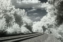 Infrared railroad tracks and trees Royalty Free Stock Images