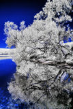 Infrared River Bank Stock Images