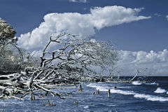 Infrared shot of driftwood and ocean Stock Photos
