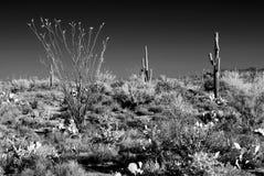 Infrared Sonora Desert Arizona. Sonora desert in Infrared central Arizona USA Stock Photos