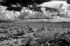 Infrared Sonora Desert Arizona stock image