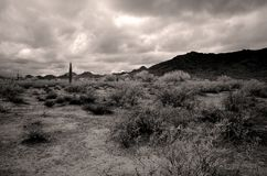 Infrared Sonora Desert Arizona San Tan Mountains. Sonora desert and San Tan mountains in Infrared central Arizona USA royalty free stock image