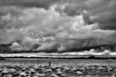Infrared Sonora pustynia Arizona Fotografia Royalty Free