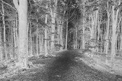 Infrared spooky forest. Dark scary forest like a fairy tale Royalty Free Stock Photo