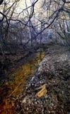 Infrared strumyk Zdjęcie Royalty Free