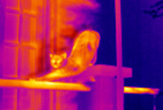 Infrared thermographic image. Infrared heat image of a stretching cat taken with a thermographic camera Royalty Free Stock Photo