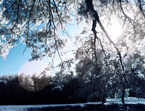 Infrared tree Stock Photography