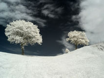 Infrared tree. Photo was made with an infrared-filter Stock Photo