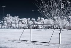 Free Infrared Tree Stock Photography - 4301962