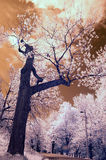 Infrared Tree. Landscape scene shot with an infrared filter Stock Images