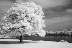 Infrared Tree. Landscape scene shot with an infrared filter stock photos