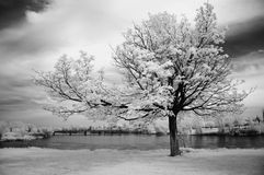 Infrared Tree. Landscape scene shot with an infrared filter Royalty Free Stock Image
