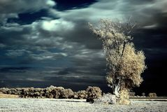 Infrared tree landscape. Photo was made with an infrared filter at the sunset in summer Stock Images