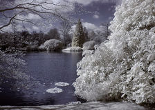 Infrared trees. Trees and lake photographed in infrared light Royalty Free Stock Photos