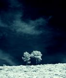 Infrared trees Royalty Free Stock Images