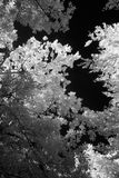 Infrared trees Stock Photo