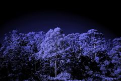 Infrared trees with dark sky backdrop stock images