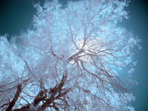 Infrared Trees, Death Valley Royalty Free Stock Photos