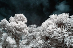 Infrared trees and leaves Royalty Free Stock Images