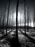 Infrared trees in the morning Royalty Free Stock Image