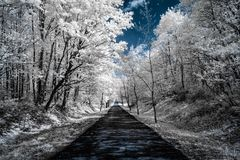 Infrared view of trees along a road under blue skies with white stock image