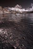 Infrared Wanaka jezioro Obrazy Royalty Free