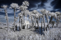 Infrared wetland landscape Stock Photos