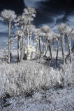 Infrared wetland landscape Royalty Free Stock Photography