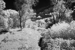 Infrared Willow Royalty Free Stock Images