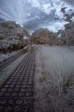 Infrared winter Stock Photography