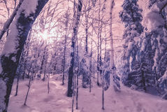 Infrared Winter Forest stock photography