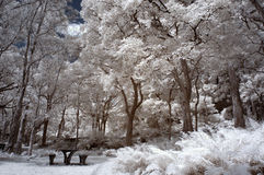 Infrared winter garden Royalty Free Stock Images