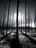 Infrarode bomen in de ochtend royalty-vrije stock afbeelding