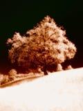Infrarode boom op een heuvel Stock Afbeelding