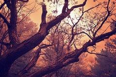 Infrarode Eiken Takken onder een Bewolkte Hemel - Wijnoogst Royalty-vrije Stock Fotografie