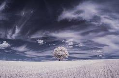 Infrarode fotografie - in foto van landschap met boom onder hemel met wolken stock foto's
