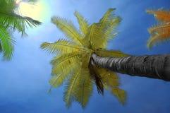 Infrarode kokospalm met hemelachtergrond Stock Afbeeldingen