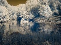 Infrarode mening bij de Alluviale gebieden van Donau ` s Royalty-vrije Stock Foto