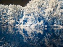 Infrarode mening bij de alluviale gebieden van Donau in Slowakije Royalty-vrije Stock Fotografie