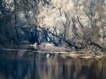 Infrarode mening bij de alluviale gebieden van Donau in Slowakije Stock Foto