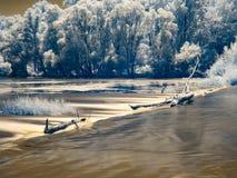 Infrarode mening bij de alluviale gebieden van Donau in Slowakije Stock Fotografie