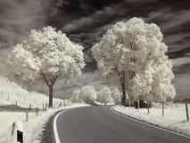 Infrarood landschap Stock Foto's